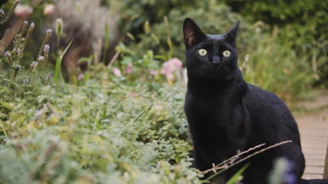 watchful black cat in garden. - 黒猫点の映像素材/bロール