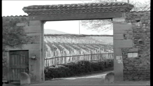 water and wine mr guimet interview sot not translated but says that wine is the source of prosperity in the area / closeup shots of small vines in... - keg stock videos and b-roll footage