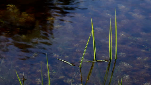 vidéos et rushes de fond de l'eau - bras mort de cours d'eau