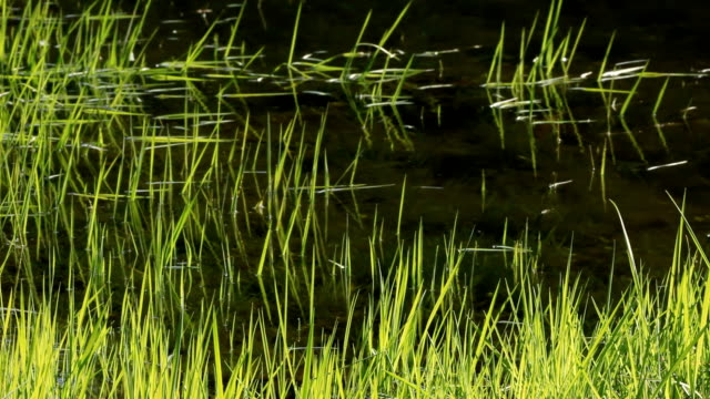 water background - backwater stock videos & royalty-free footage