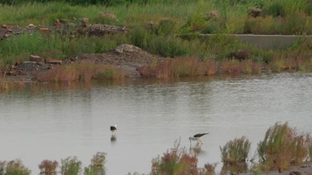 water bird in wetland