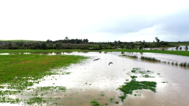 water birds flock to the flooded farmland after heavy rains - torrential rain stock videos & royalty-free footage