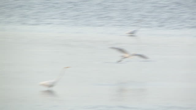 Water birds in the ocean 2 - HD 30F