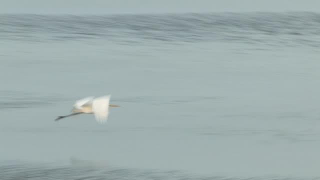 vídeos de stock e filmes b-roll de aves de água no oceano 6-hd 60i - quatro animais