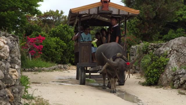 water buffalo carriage in taketomi island, okinawa, japan - cattle点の映像素材/bロール