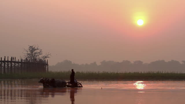Water Buffalo pulling a Carriage through a River at Sunrise 2