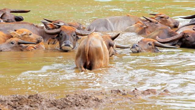 vídeos y material grabado en eventos de stock de agua de la ciudad de buffalo. - nariz de animal