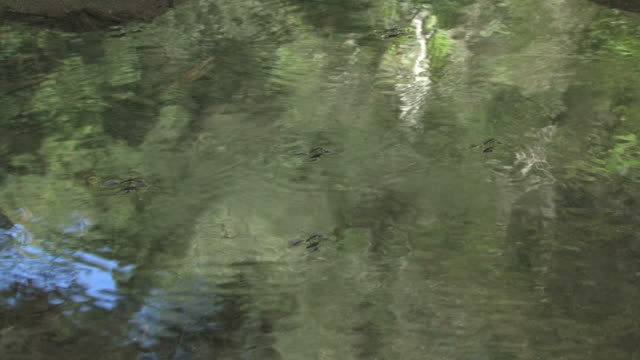 water bug 2 - hd 30f - invertebrate stock videos & royalty-free footage