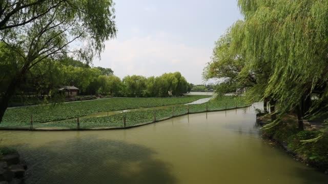 water caltrop field on the south lake,jiaxing,zhejiang,china - 生い茂る点の映像素材/bロール