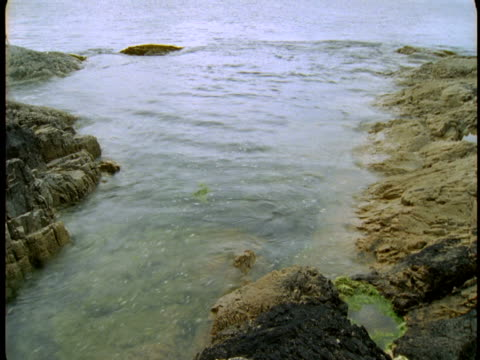 water collects in a tide pool. - gezeitentümpel stock-videos und b-roll-filmmaterial
