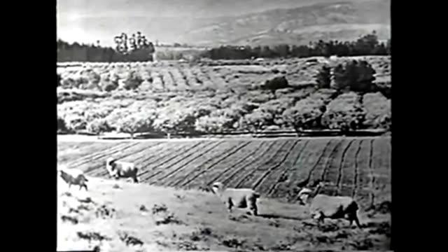 1959 water conflicts: johns hopkins science review - 1959 bildbanksvideor och videomaterial från bakom kulisserna