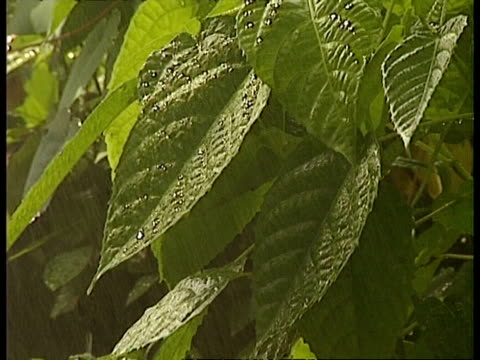 mcu water dripping from leaves - sprinkler stock videos and b-roll footage