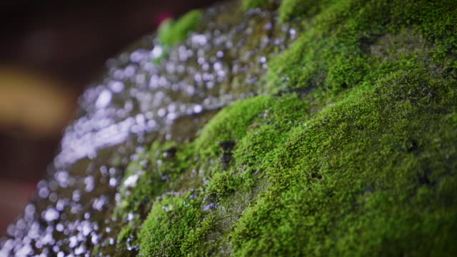 water dripping on the green moss on the rock after raining, nature background concept - muschio video stock e b–roll