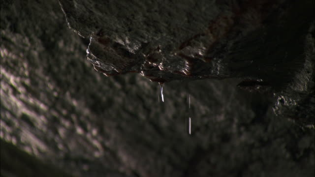 Water drips from cave roof, Cornwall, UK
