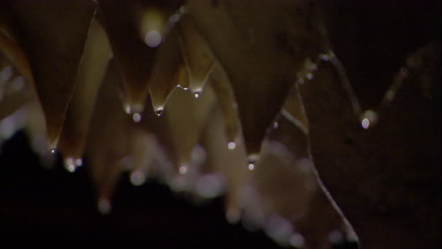 vídeos de stock, filmes e b-roll de water drips from jagged stalactites in borneo's deer cave. available in hd. - stalactite