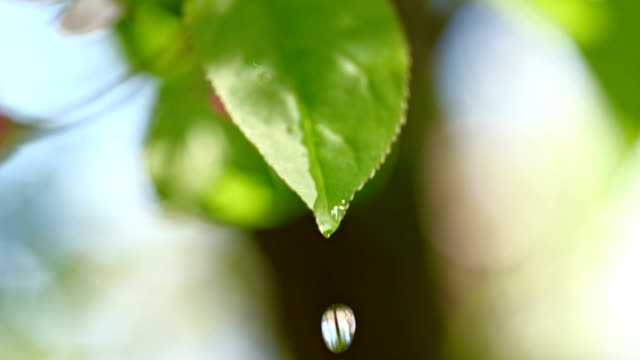 slo mo water drop dripping off the leaf - condensation stock videos & royalty-free footage