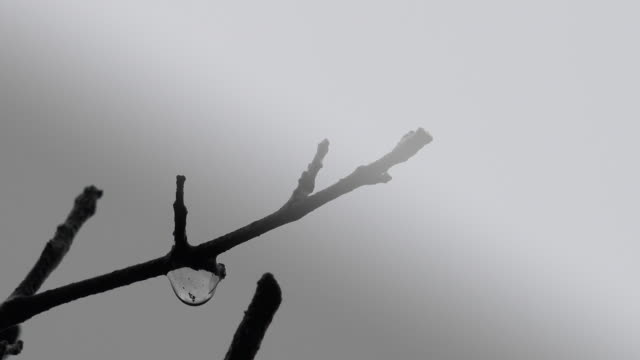 water drop falling from a tree branch - dew stock videos & royalty-free footage