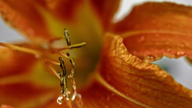SLO MO waterdruppel vallen op een stam van een bloem
