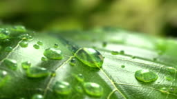 Water Drop Flows Down on a Leaf