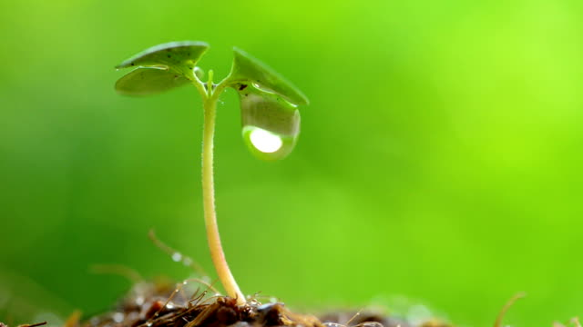 water drop from green sprout - raindrop stock videos & royalty-free footage