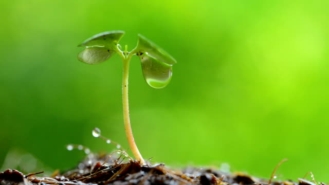 water drop from green sprout - seedling stock videos & royalty-free footage