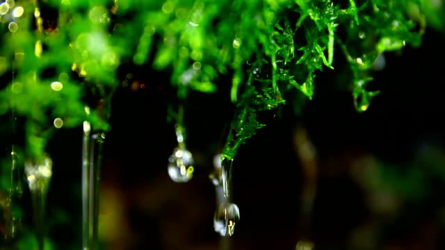 water drop on green moss - muschio video stock e b–roll