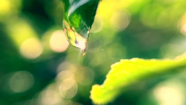 goutte d'eau sur feuille avec flare soleil