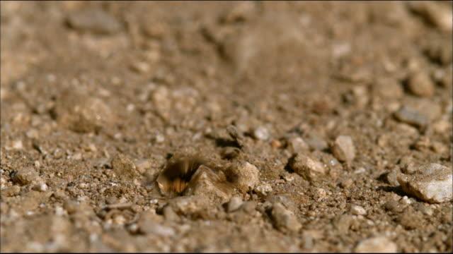 water drop on soil - mindre än 10 sekunder bildbanksvideor och videomaterial från bakom kulisserna
