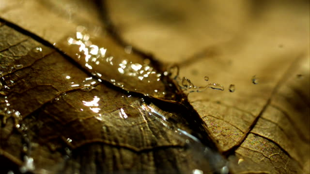 Water droplet falls onto a leaf