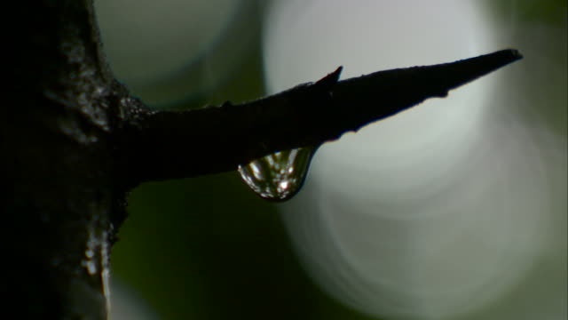 vidéos et rushes de water droplet on plant, malaysia. - tronc d'arbre