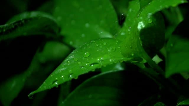 water droplets falling onto leaves - 葉点の映像素材/bロール
