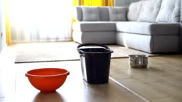 Water dropping in bucket and dishes from ceiling, risk of shingles, damaged roof