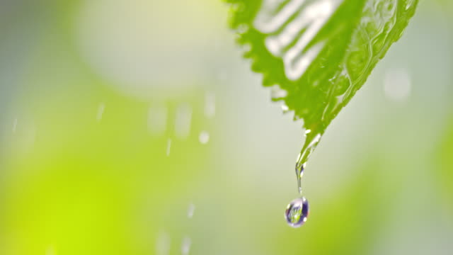 slo mo water drops falling from a leaf in rain - leaf stock videos & royalty-free footage