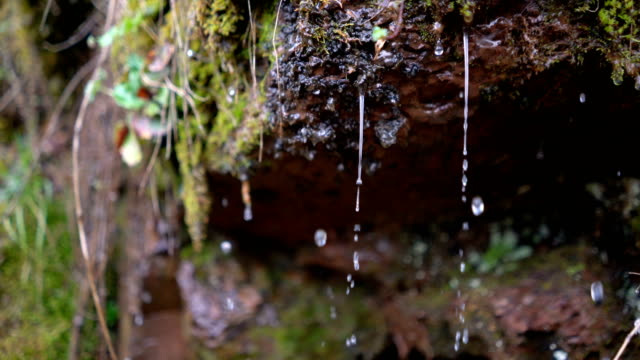 Water Drops Falling From Moss Covered Rocks