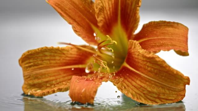 SLO MO waterdruppels vallen op het hoofd van een bloem