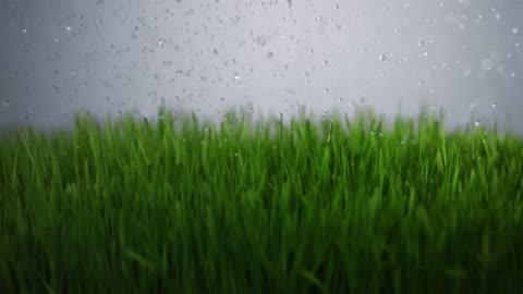 vídeos y material grabado en eventos de stock de slo mo cu water drops falling on grass - hierba familia de la hierba