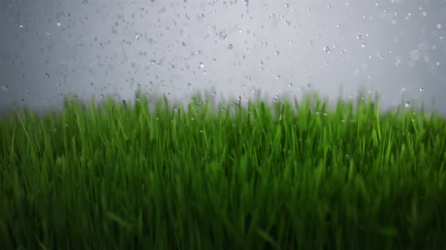 slo mo cu water drops falling on grass - grass stock videos & royalty-free footage