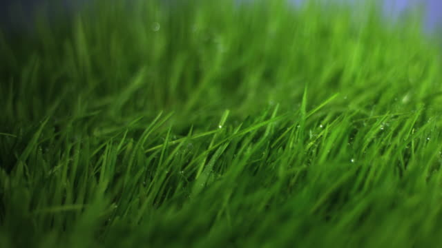 slo mo ecu water drops falling on grass - gras stock-videos und b-roll-filmmaterial