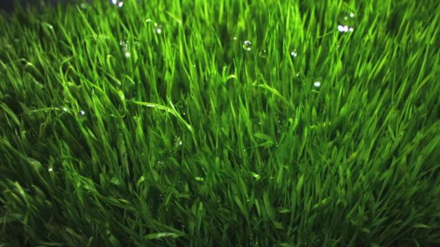 SLO MO ECU Water drops falling on grass