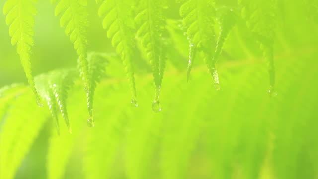 vídeos de stock, filmes e b-roll de cu water drops on fern / kasai, chiba, japan - foco difuso