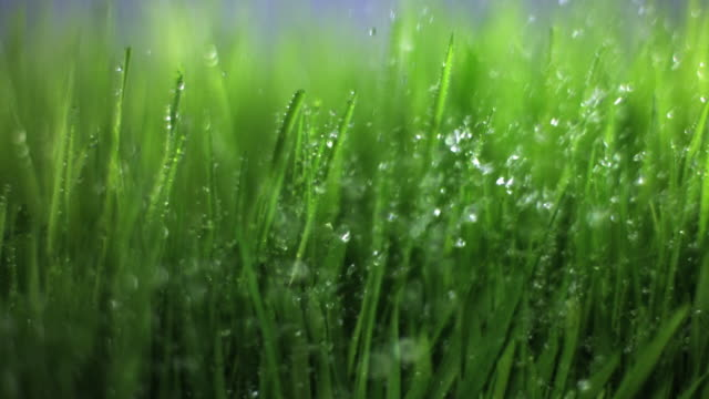 SLO MO ECU Water drops on grass