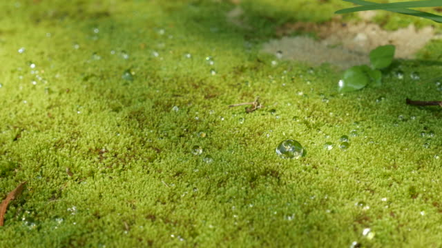 water drops on grasses background , moss - spray insulation stock videos & royalty-free footage