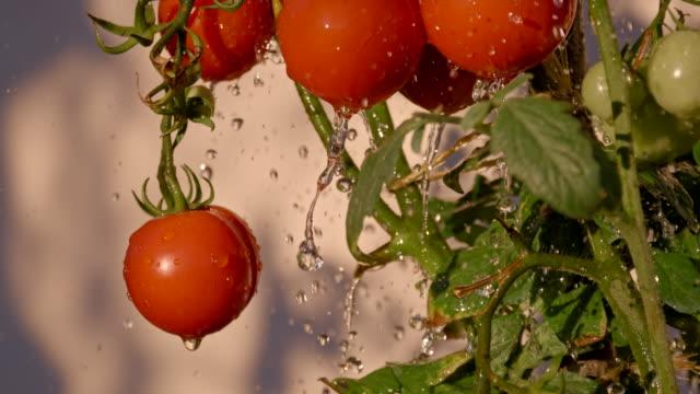 SLO MO Water Drops Splashing Agains Tomatoes