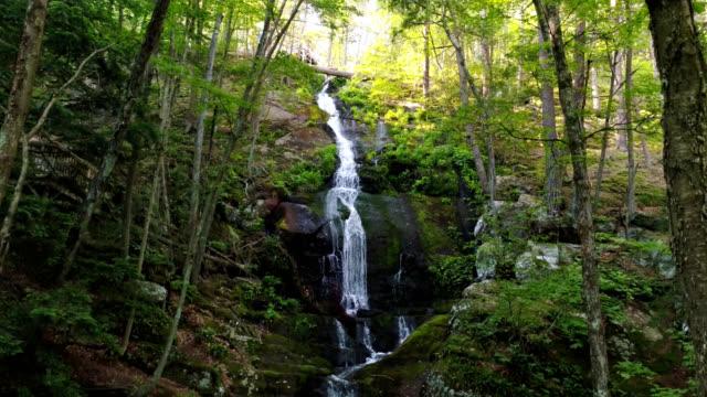 vidéos et rushes de chute d'eau en forêt en cascade vers le bas une chute abrupte dans la forêt profonde - mousse végétale