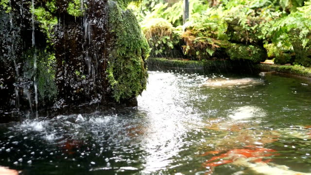 water fall with koi fish in garden - koi carp stock videos & royalty-free footage