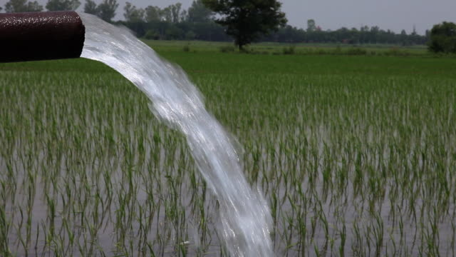 water falling from tubewell in the farms  - punjab region stock-videos und b-roll-filmmaterial