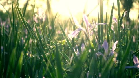 vídeos y material grabado en eventos de stock de agua que cae sobre la hierba verde - hierba familia de la hierba