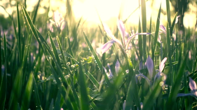 water falling on green grass - grass stock videos & royalty-free footage