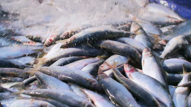 water falling over herring - animal eye stock videos & royalty-free footage