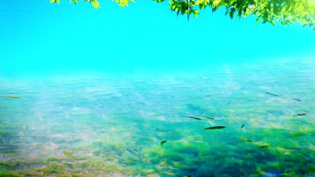 水、魚と葉
